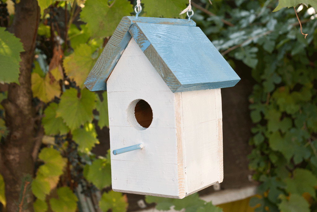 how to build a bird house | howtospecialist - how to build, step