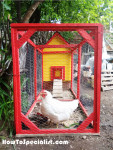 How to build an insulated chicken coop